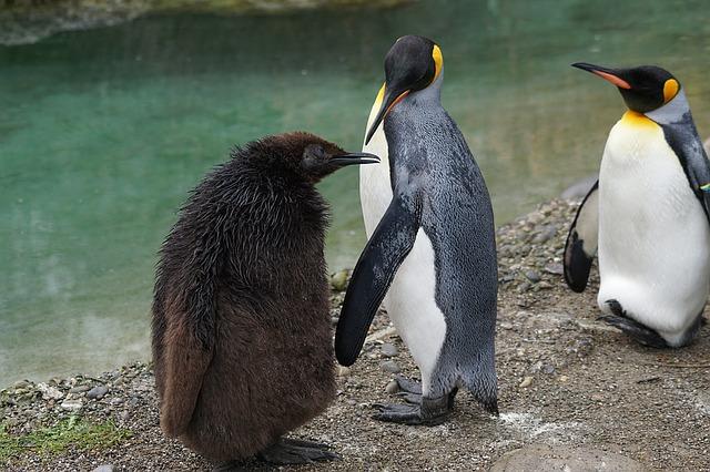 tři tučňáci