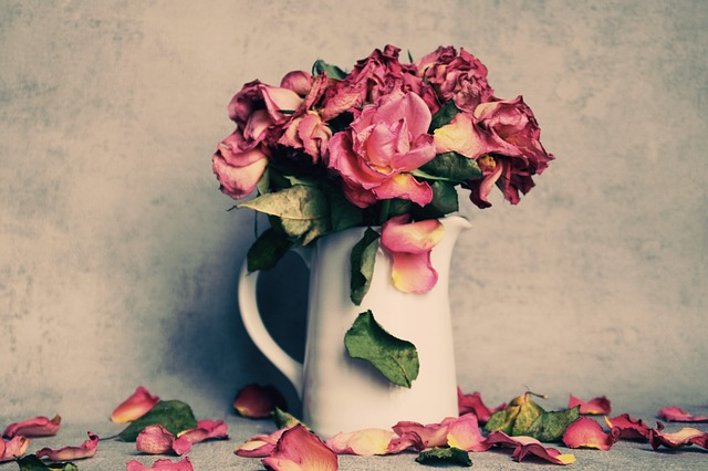 Usychající růže